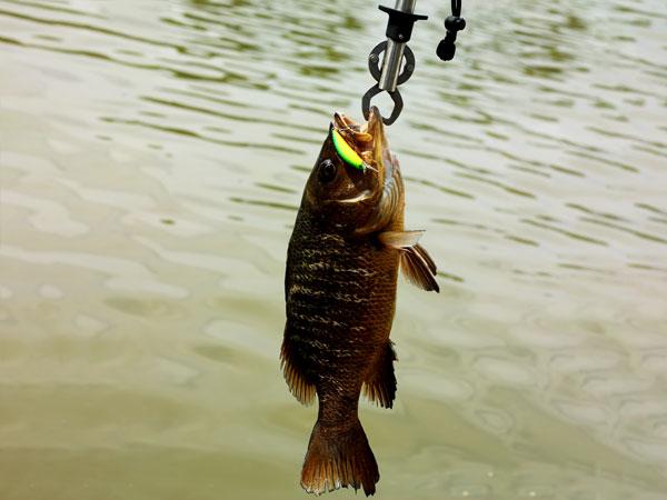 XIN-V -Best Ice Fishing Lures Xin-v Crankbait Go-cm001 Floating Bait Wobbler Trout-10