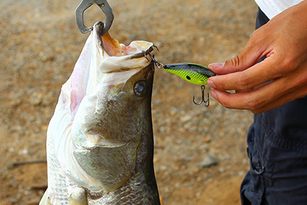 perch diving mini bass lures XINV Brand company