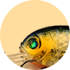 XIN-V -Best Xin-v Crankbait Vc04 50mm 10g Floating Bass Fishing Lure Rattle Sound-3
