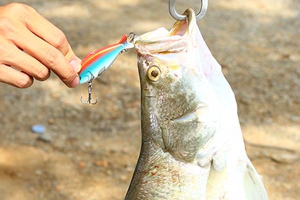 XIN-V -Trout Fishing Lures Manufacture | Xin-v Crankbait Vv03 Waver Ghost Vib-19